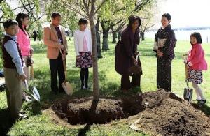 Washington Cherry Tree Planting 2012